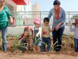 Cultivando el Huerto